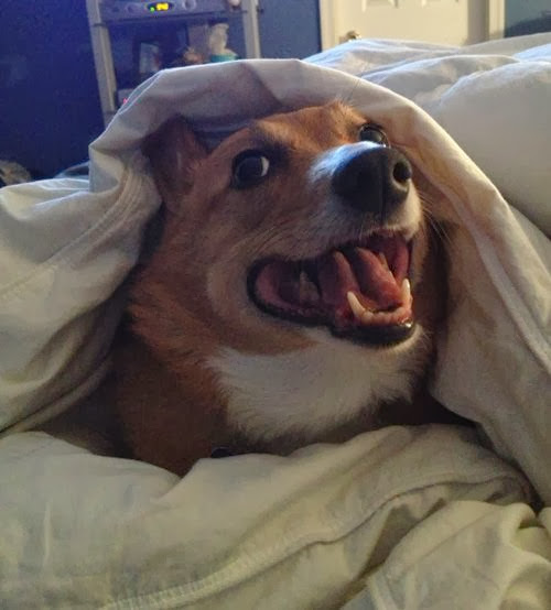 Rise and Shine #Corgi Nation!