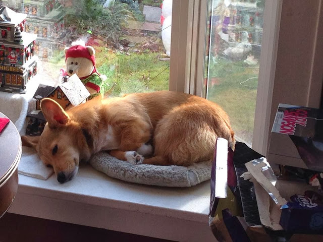 Post-Christmas Poop-Out …