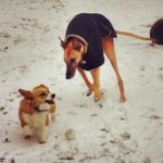 Snow Dogs: Winnie and Ezzie!