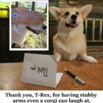 Scamp the #Corgi's Awesome Jimmy Fallon-Style Thank You Notes
