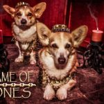 Game of Bones: #Corgi Edition