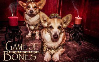 Game of Bones: #Corgi Edition