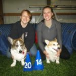 Team Daily Corgi Goes to 2014 AKC National Agility Championship!