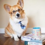 I swear the #Corgi really DID eat my homework!