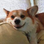 Saturday Smiler: Poppy!