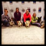 #Corgis Rock the 2014 AKC Agility National Championship!
