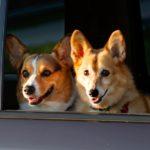 Wednesday Window Watchers!