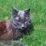 Goodbye for Now, Kitten Girl …