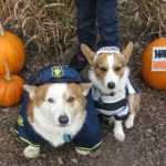 #Corgi Cops n' Robbers: A Dogue's Gallery!