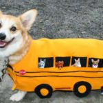 The Daily #Corgi Goes Back to School …