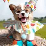 Hang on to your party hats … it's a #Corgi Puppy In a Clown Outfit.