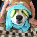 Every #Corgi Needs a Spa Day!