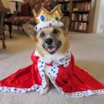 More #Corgis in Costumes: Halloween Week Rolls On!