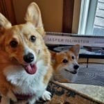 Saturday #Corgi Smiler: Radar O'Reilly of North Dakota!
