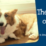 Blue Ribbon #Corgi Blogger:  The Chronicles of Cardigan!