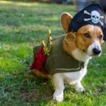 More #Corgis in Costumes: Get Your Halloween On!