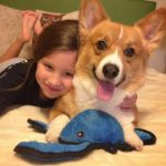 Kids n' #Corgis Cam: Kairi and Abbott!