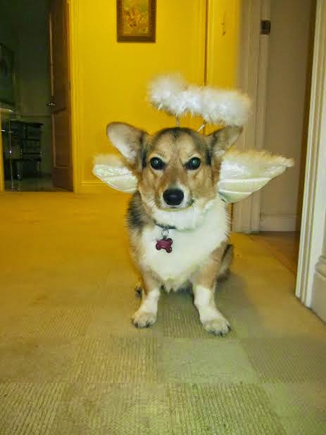 #Corgis in Costumes: It's Howl-O-Ween Week!
