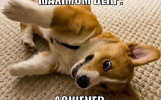 Friday Frolics: Corgi LOLZ!