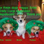 The Daily #Corgi Happy Howlidays Rafflepalooza: Twenty THREE Prize Packages!