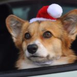 What's A Christmas Without Corgis?