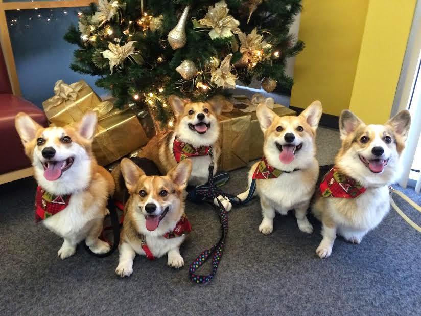 A Very #Corgi Christmas Eve!