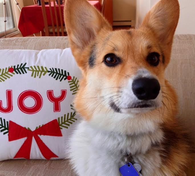 What's A Christmas Without #Corgis?