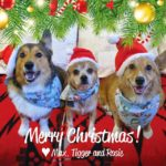 Monday Morning Merriment: More Christmas #Corgis!