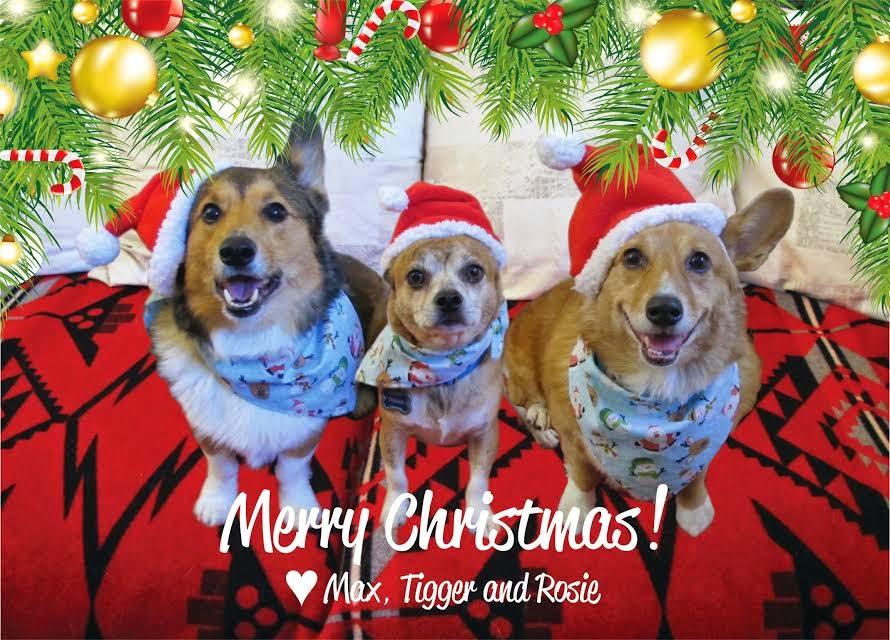 Monday Morning Merriment: More Christmas #Corgis!