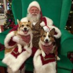 The Twelve Days of Christmas #Corgi Photos — Day One!