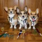 Happy New Year #Corgi Nation!