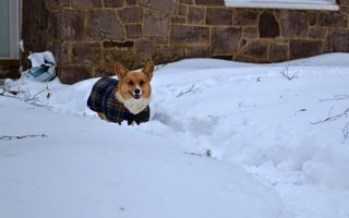 Wordless Wednesday: Maggie's Snow Romp in 5 Parts!