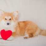 Marcel Le Corgi: It's Le LOVE!