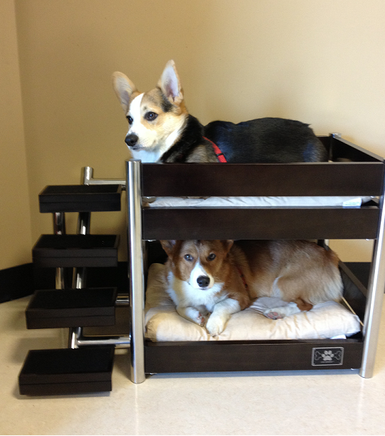 Bunk Bed Buddies: Reed and Riley!
