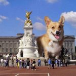 Twelve Ways the Royal #Corgis Have It Better Than You