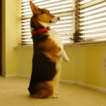 Back by popular demand … Wednesday Window Watchers!