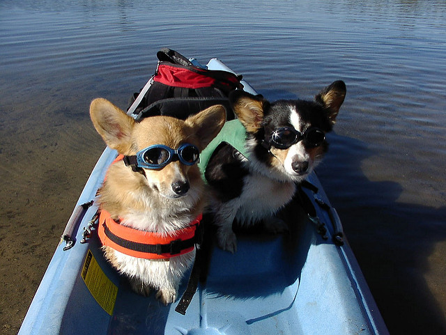 Get Your (Unofficial) Summer On! #Corgis in Kayaks and Canoes