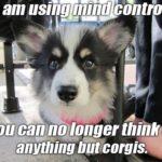 Corgi Mind Control!