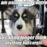 True #Corgi Mind Control
