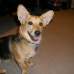 Eva The Diva of Kentucky: Truly Corgi – licous!