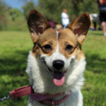 Connie of California: Winning The #Corgi Lottery!