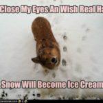 LOL #Corgi: Ice Cream Dreamz!