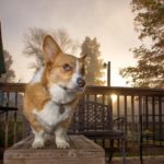 Nine Things #Corgis Control With the Power of Their Minds (and one they don't).