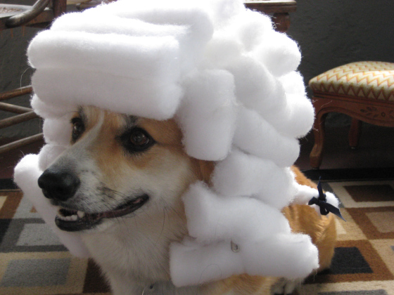 Wigged Out Wednesday: Ten #Corgis Wearing Wigs