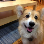 Jasper Islington: The Rise of a #Corgi Media Mogul!