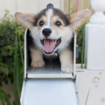 More #Corgi In Your Mailbox? I Want YOU for My Mailing List!