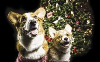 O Christmas Tree, O Corgi Tree!
