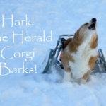 Corgin' In a Winter Wonderland!