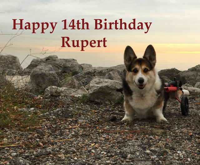 Dear Rupert: Fourteen Years and One Hundred Life Lessons