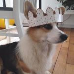 Leopold of France: Je Suis #Corgi!